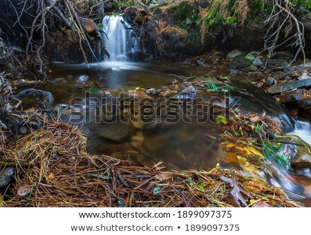 natural forest park in autumn Moncayo Stock photo © pedrosala