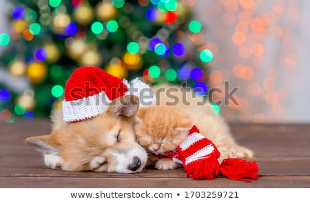 cute cat with stripes wears santa hat and lies Stock photo © feedough