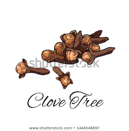 オーガニック クローブ 新鮮な ボウル 白 自然 ストックフォト © bdspn