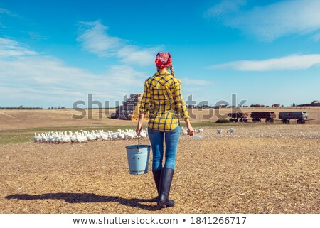 Farmer with her geese on a poultry farm Stock photo © Kzenon