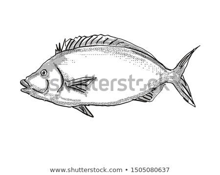 Nueva Zelandia peces Cartoon retro dibujo estilo Foto stock © patrimonio