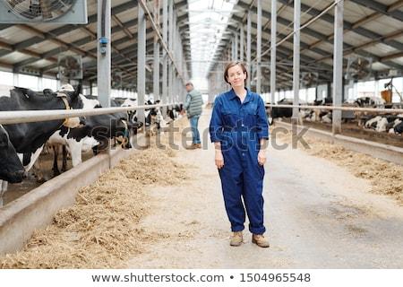 çiftçi · veteriner · mandıra · sığırlar · kadın · gıda - stok fotoğraf © pressmaster