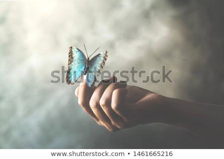 Fantasy papillon belle lumineuses résumé Photo stock © Lightsource