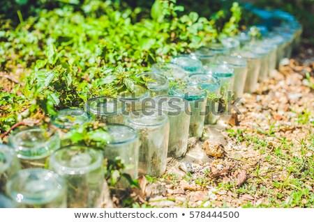 plástico · vidrio · vintage · pared · cocina - foto stock © galitskaya
