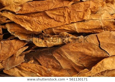 Asciugare tabacco foglie pezzi legno Foto d'archivio © bdspn