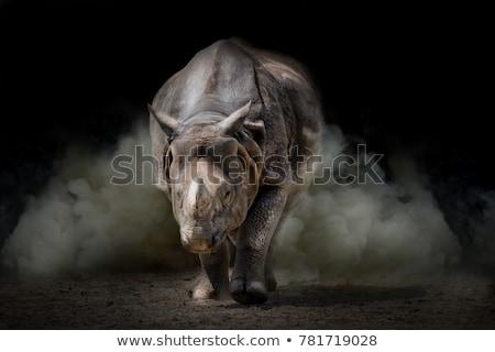 Rhinoceros in the wild Stock photo © Anna_Om