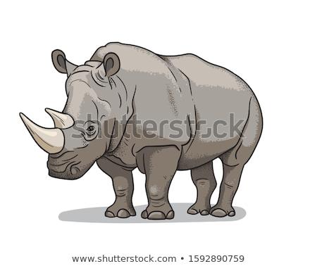 Rinoceronte savana ilustração feminino animal desenho animado Foto stock © adrenalina