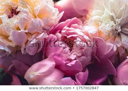Rosa fiori floreale arte botanico lusso Foto d'archivio © Anneleven