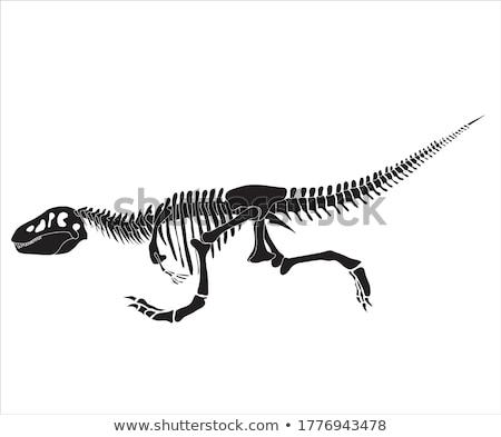 Running dinosaur Stock photo © bennerdesign