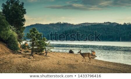 Kaliforniya · huzurlu · sabah · sahne · kırsal · kuzey - stok fotoğraf © craig