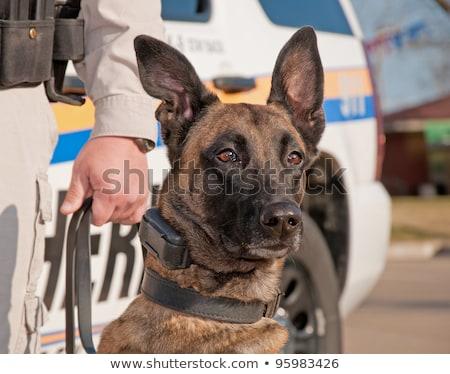 mexikói · kutya · nagy · szombréró · kalap · piros - stock fotó © shevs
