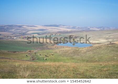 Transylvanian hilly landscape Stock photo © RazvanPhotography