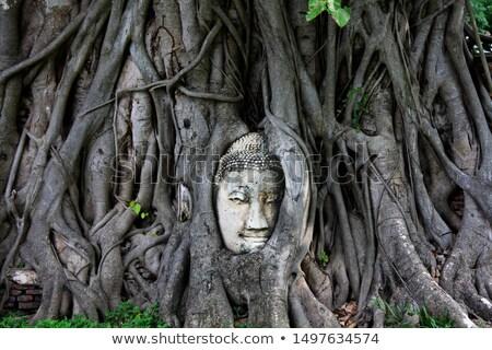 голову · Будду · статуя · корней · дерево - Сток-фото © smithore