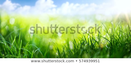 Spring Grass Stock photo © adamson