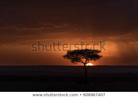 kaland · Kenya · park · szavanna · csodálatos · kék · ég - stock fotó © anna_om