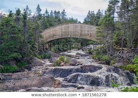 Houten brug stream bomen verweerde Stockfoto © pixelsnap