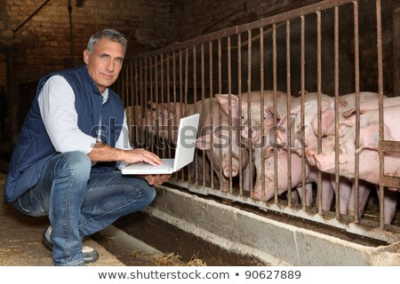 50 years old breeder with a laptop in front of pigs Stock photo © photography33