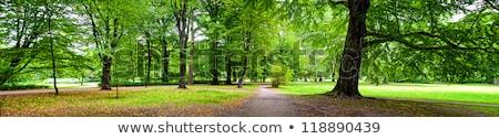 Park panoramic view Stock photo © Vectorex