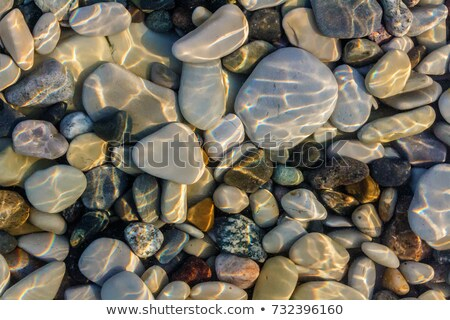 мелкий · воды · пляж · саду · океана - Сток-фото © Armisael