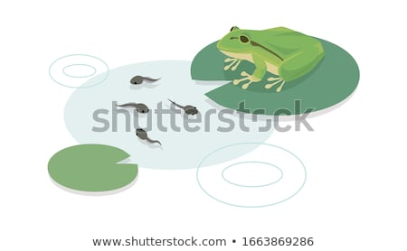 Tadpoles in the water Stock photo © ryhor