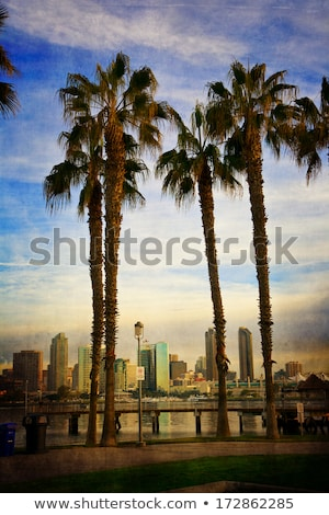 San · Diego · Californie · Skyline · nuit · eau · ville - photo stock © cboswell