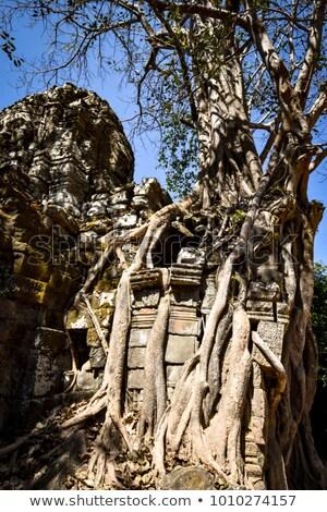 kő · művészet · Angkor · Kambodzsa · háttér · építészet - stock fotó © bbbar
