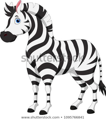 Zebra rajz izolált fehér mosoly zöld Stock fotó © dagadu