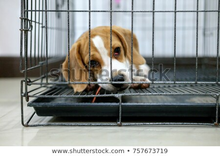 Triest beagle puppy vergadering naar Stockfoto © pkirillov