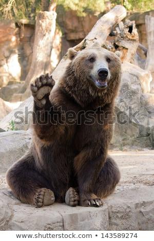 Bear waving hello stock photo © Stanly