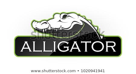 Fekete fej krokodil vektor kép logo Stock fotó © ultrapro