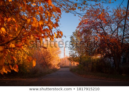 Path leading to a factory Stock photo © zzve