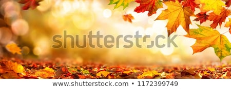 Autumnal leaf of maple and sunlight Stock photo © beholdereye