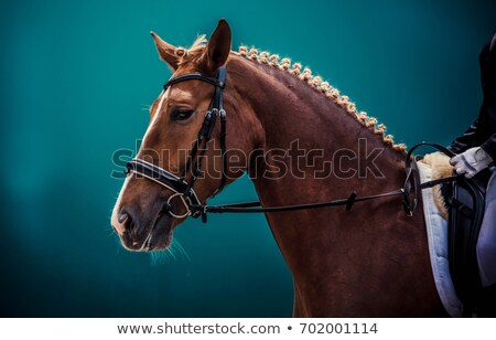 Saddled Brown and White Horse stock photo © rhamm