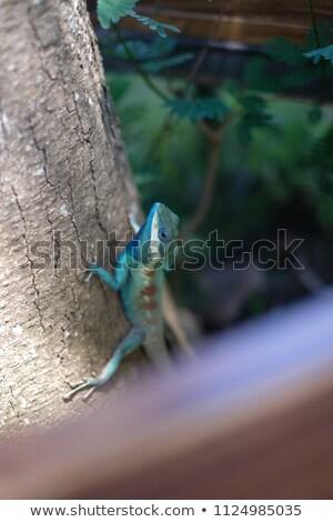 Thai caméléon faible forêt Photo stock © smuay