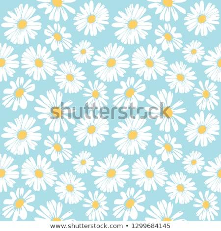 bahar · papatyalar · alan · güneş · arı - stok fotoğraf © efischen