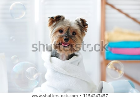 Mosás kutyakölyök kutya közelkép öt kéz Stock fotó © Witthaya