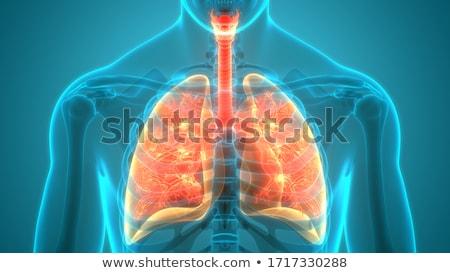homem · fundo · medicina · azul · ciência · vermelho - foto stock © designers