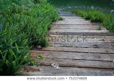 Pathway in the forest made of wood Stock photo © Yongkiet