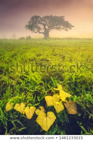 Güzel sonbahar resim orman kapalı sis Stok fotoğraf © Geribody