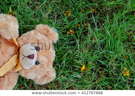 Two TEDDY BEAR brown color on the grass  stock photo © Mikola249