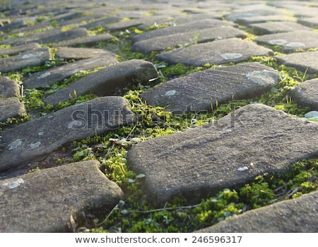old cobble stone road with moss and evening low sun           Stock photo © Melvin07