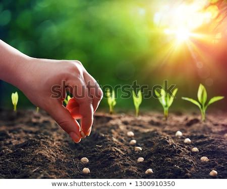 vrouw · hand · zaaien · zaad · tuinieren · tuin - stockfoto © jarin13