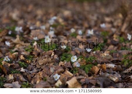 фото землю уровень деревья Blue Sky цветок Сток-фото © olandsfokus