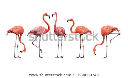 Rózsaszín flamingó tavacska állatkert Olaszország égbolt Stock fotó © master1305
