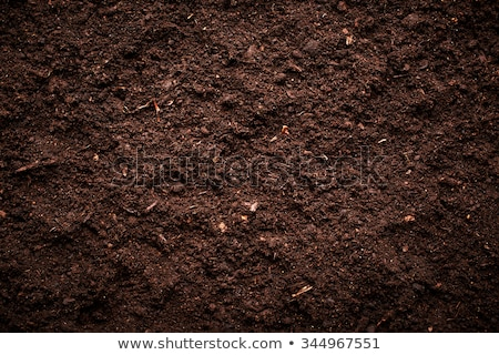 Soil texture Stock photo © janaka