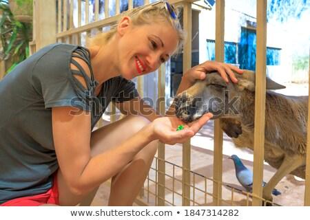 Lány etetés baba kenguru kislány park Stock fotó © epstock