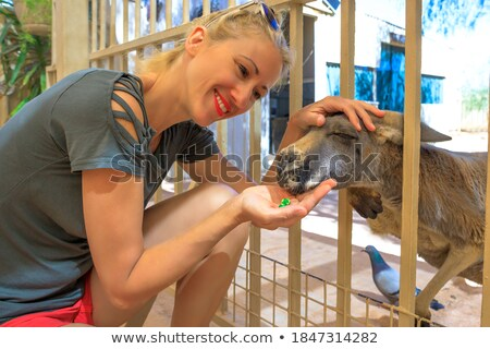 Ragazza baby canguro bambina parco Foto d'archivio © epstock