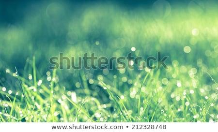 spinneweb · gedekt · dauw · druppels · weide · zonnige - stockfoto © taiga
