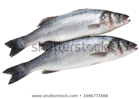 two sea bass isolated Stock photo © Antonio-S