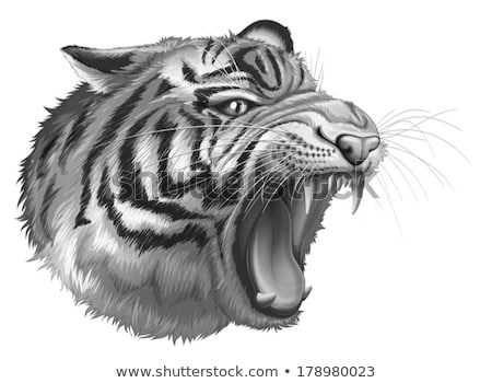 A grey tiger roaring Stock photo © bluering